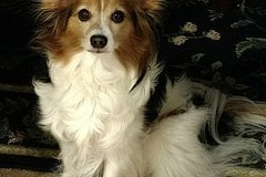 Request Quote: Reigning Cats & Dogs Pet Sitting Service - Largo FL - Largo, FL