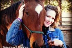 Free Consultation: Equine Assisted Psychotherapy - Evergreen, CO