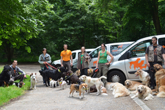 Request Quote: Pet Relocation Service : USA to Europe