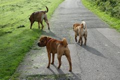 Request Quote: Dog walking, Pet Sitting & Pet Taxi Services - Luton, UK