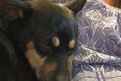 Request Quote: Pet Sitter and Dog Walker - Odessa, FL