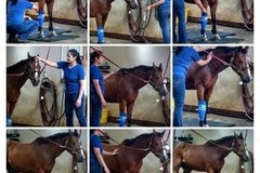 Equine Massage Therapies - Marietta, GA