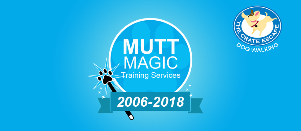 Mutt Magic Training Group Classes Baltimore Md