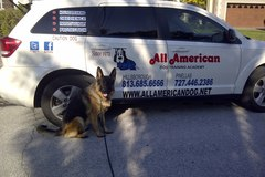 Request Quote: In Your Home Dog Training- All American Dog Training Academy