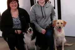 Free Consultation: Personal Family Dog Trainer - Coyne Center, IL