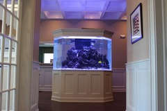 Free Consultation: Aquarium Installation and Maintenance - East Quogue, NY