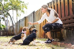 Request Quote: Key To Happy Dogs - Dog Training - Weston, FL