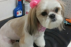 Request Quote: Pet Grooming  for 40 years in Norwalk, CA