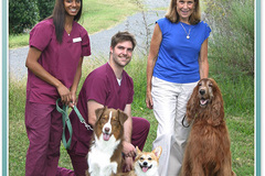 Request Quote: Steele Creek Animal Hospital - Charlotte, NC