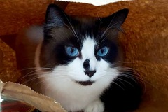 Request Quote: All Cats PDX - Total Cat Care In Your Home - Portland, OR