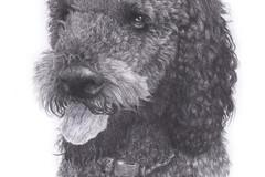Request Quote: Custom Pet Portraits - Oxford, UK