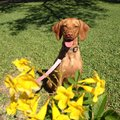 Free Consultation: Dog Walker - Game Time Dog Services - Austin, TX