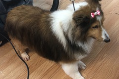 Request Quote: ARFordable Pet Grooming - Orlando, FL