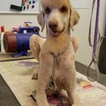 Request Quote: Casper's Pet Grooming - Glendale, AZ