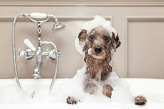 Request Quote: AZ Mobile Spaws - Mobile Pet Grooming - Phoenix, AZ