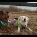 Free Consultation: Harmony Dog Training - Burlington, VT