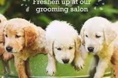 Request Quote: Grooming & Boarding - West Point, VA