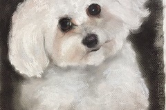 Request Quote: Pet Portraits in Pastel - Wilmington, DE