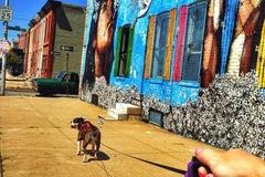 Free Consultation: Prancing Pooches | Premium Dog Walking & Pet Sitting Service