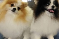 Request Quote: All Star Grooming and Training - Fruitport, MI