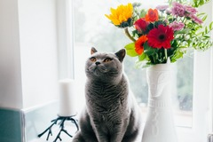 Request Quote: Customized care for your pet's unique needs! - Spokane, WA