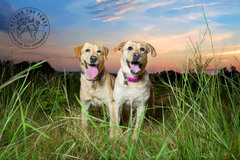 Request Quote: Beyond the Fence | Adventure Dog Photography - Boston, MA