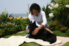 Request Quote: Animal Healer / Reiki - Albuquerque, NM