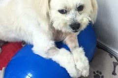 Request Quote: Animal Rehabilitation w/ Dr. Doman - Dana Point, CA