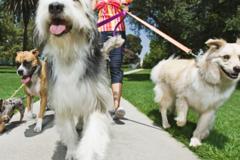 Just Around The Corner Pet Sitting and Dog Walking