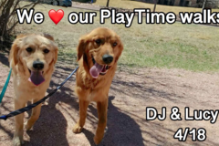 Request Quote: PlayTime Pet Sitters & Dog Walkers of Colorado Springs - Colorado Springs, CO
