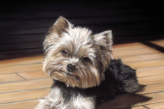 Request Quote: Michele Amatrula, Realistic Pet Portraits - New York, NY