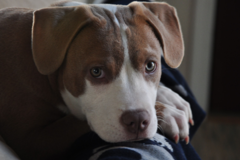 Request Quote: At Attention Dog Training - King of Prussia, PA