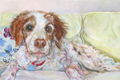 Pet Portraits in Oil by Kimberly McSparran
