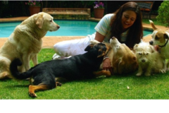 Request Quote: Animal Eyes Intuitive Animal Communication - South Africa