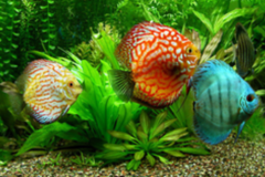 Aquatic Creations Fresh/Saltwater Aquarium Services-Davie,FL