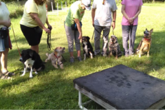 Request Quote: Barclay Farms, Professional Dog Training -  Conroe, TX