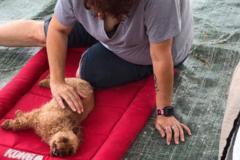 Request Quote: Mobile Mutt Massage - Gainesville, FL