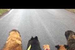FourPaws Petsitting - Ashtabula, OH