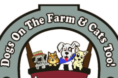 Dogs On The Farm & Cats Too!