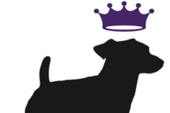Dogs Deserve It - Chicagoland's premier dog walking  company