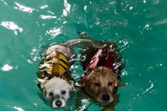 K9 Swim & Trim - Wheaton, IL