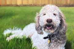 Pet Portrait Paintings and Drawings