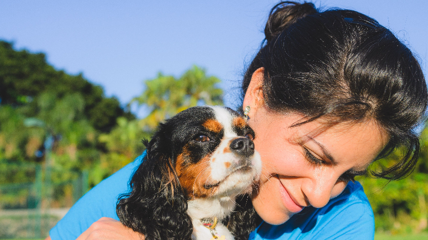 The Definitive Guide for How To Find A Pet Sitter In Miami, Fl