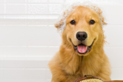 Request Quote: Angel Touch Pet Spa - Holbrook, NY