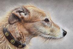 Request Quote: animal portraits  - Penpont, BreconLDEU