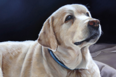 Request Quote: Custom Pet Paintings - North Wales, PA