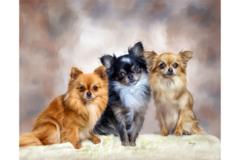 Request Quote: Pet Portraits by Barry  - Frisco, TX