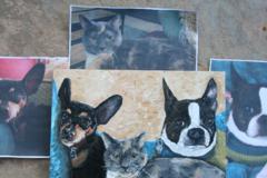 Custom Hand Painted Pet Portraits - Santa Clarita, CA