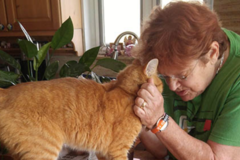 Pet Sitters and More, LLC - Hollywood, FL