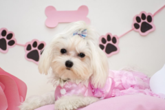 Primped Pooches - Plano, TX